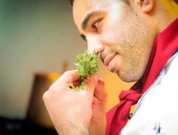 asesor experto en gastronomía